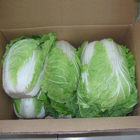 这里的蔬菜——山东行(一) - h.mo - h.mo的博客